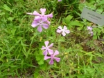 Wild Flowers in Smoky Mountains